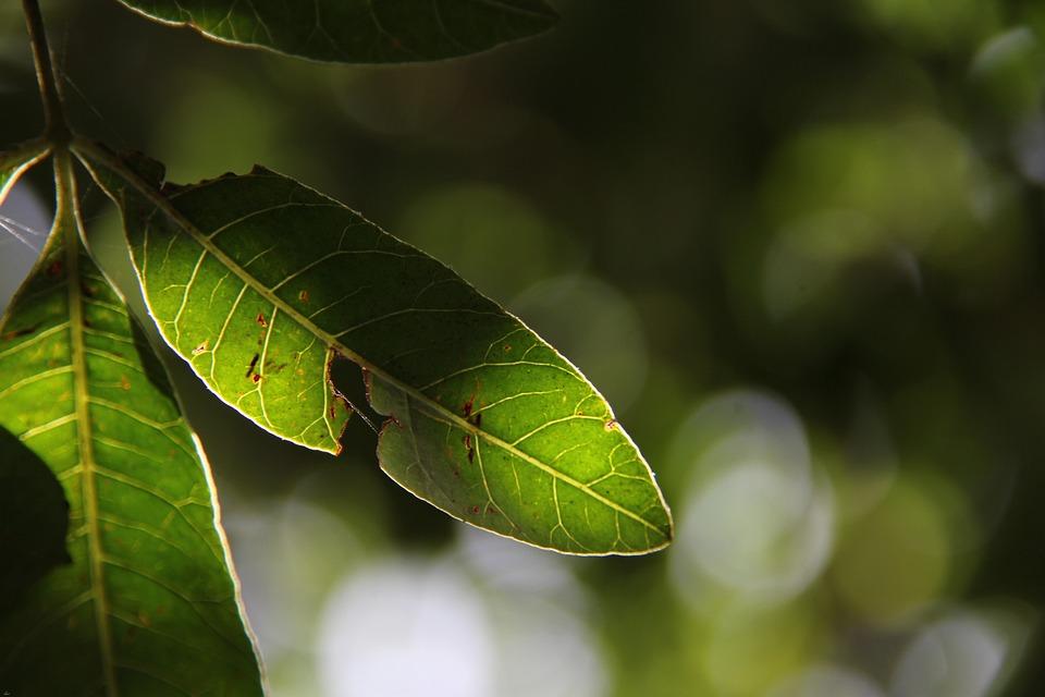 Nature, Leaf, Green, Sun, Easter, Spring, Light
