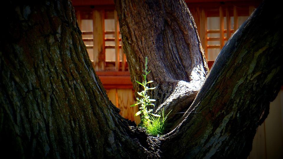 Tree, Sunlight, Unusual, Nature, Plant, Green, Summer
