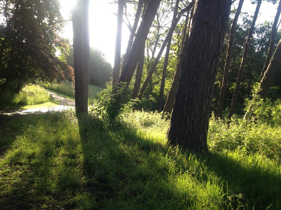 Sunshine, Sunset, Path, Footpath, Green, Grass, Trees