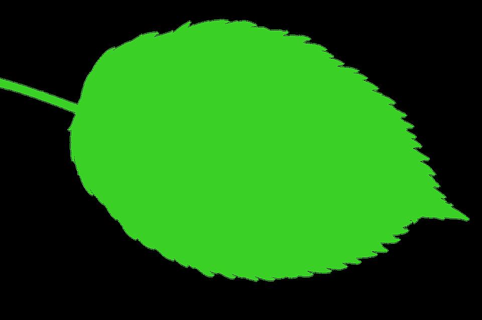 Bio, Nature, Leaf, Green, Symbol, Icon, Plant, Eco