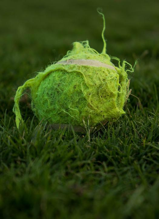 Grass, Ball, Tennis, Sports, Green, Summer, Hobby