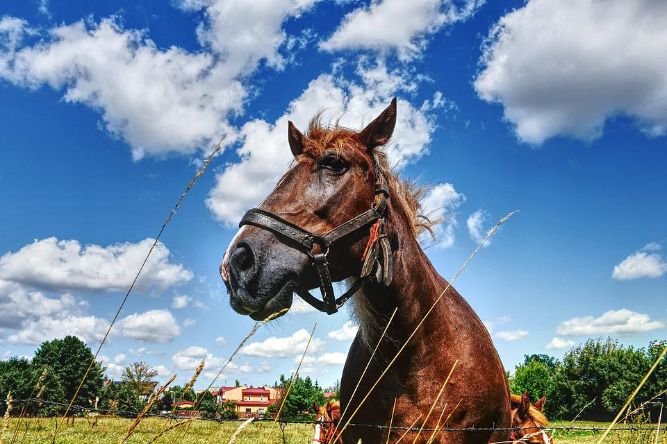 The Horse, Horses, Meadow, Green, Summer, Animals