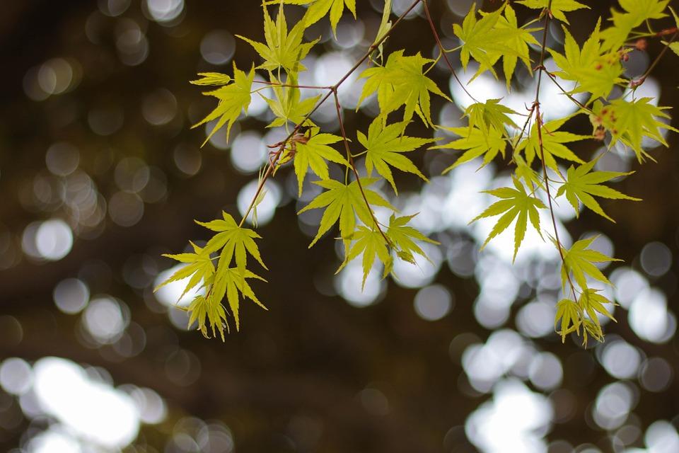 Green, The Leaves, Hangzhou