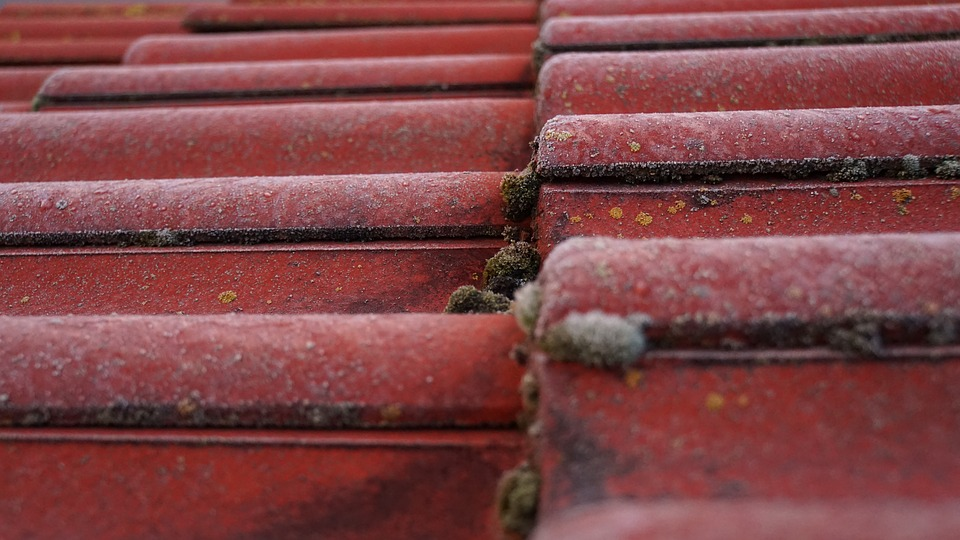 Tile, Roof, Moss, Bemoost, Roofing, Red, Green, Nature