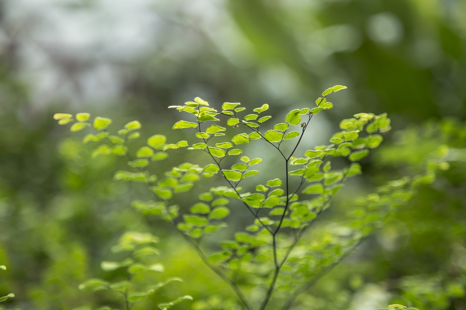 Tiny, Leaves, Botanical, Green, Leaf, Nature, Small