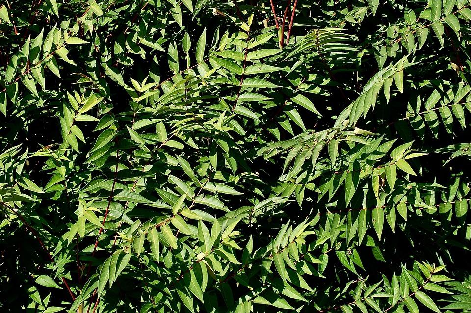 Leaves, Green, Vegetable, Tree, Grass, Backwards