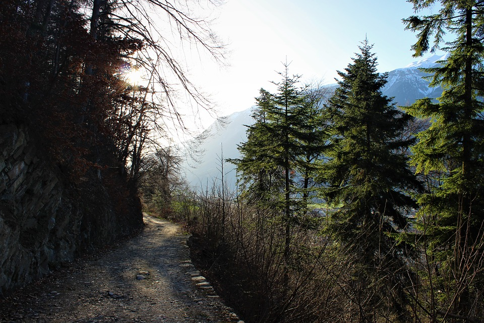 Forest Path, Fir Tree, Spring, Green, Nature, Tree