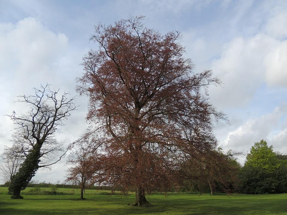 Tree, Nature, Green, Landscape, Natural, Season
