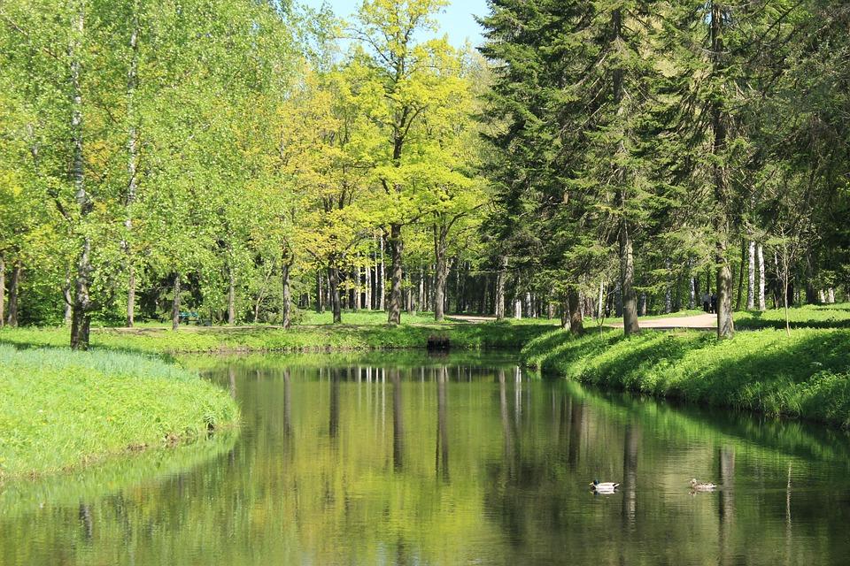 Green, Tree, Water, Duck, Natural, Grass, Nature