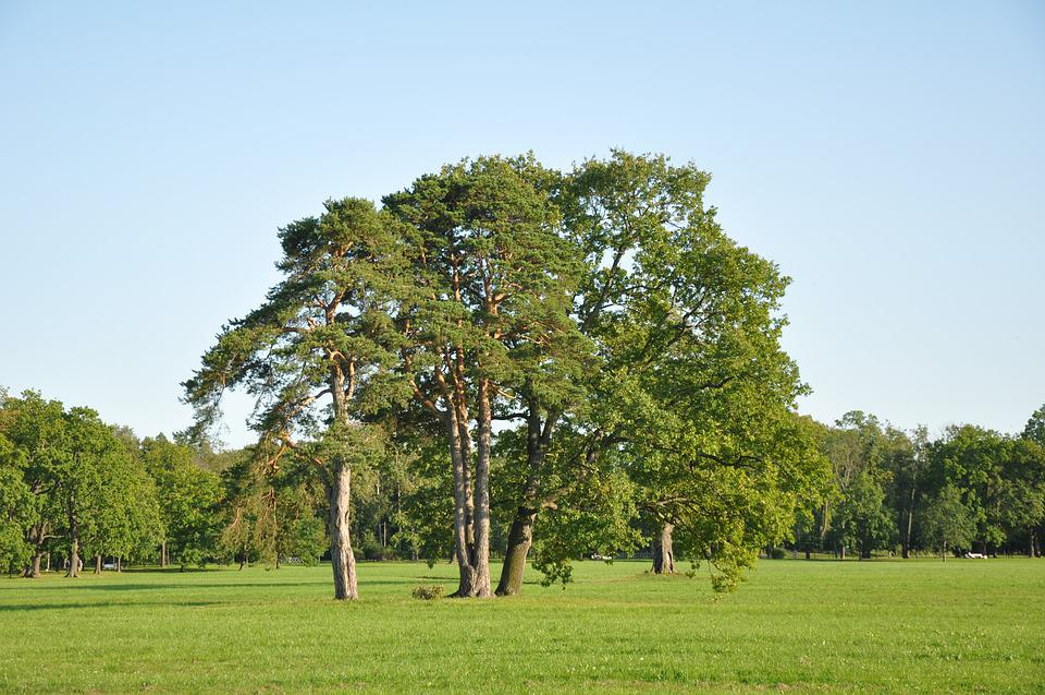 Park, Trees, Nature, Landscape, Tree, Green, Beautiful