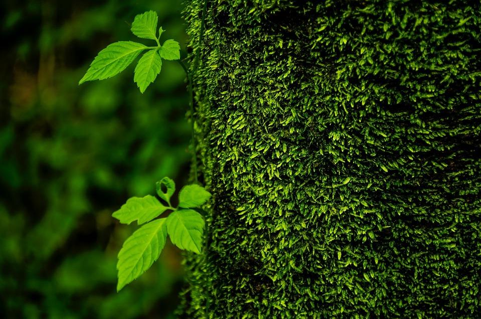 Trees, Green, Life