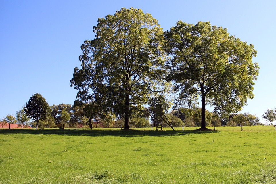 Trees, Individually, Nature, Meadow, Sky, Green