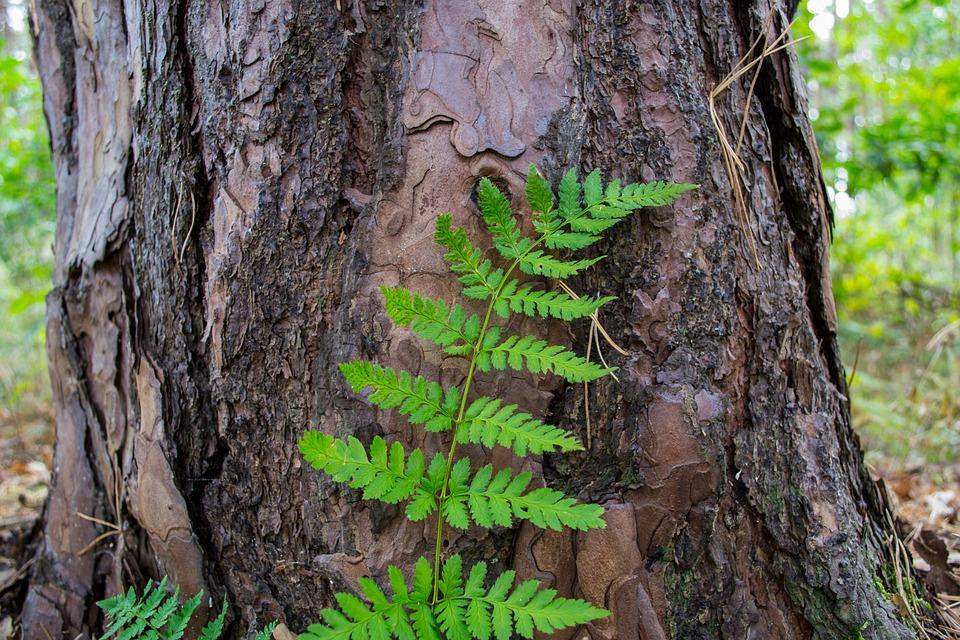 Tribe, Bark, Leaf, Green, Brown