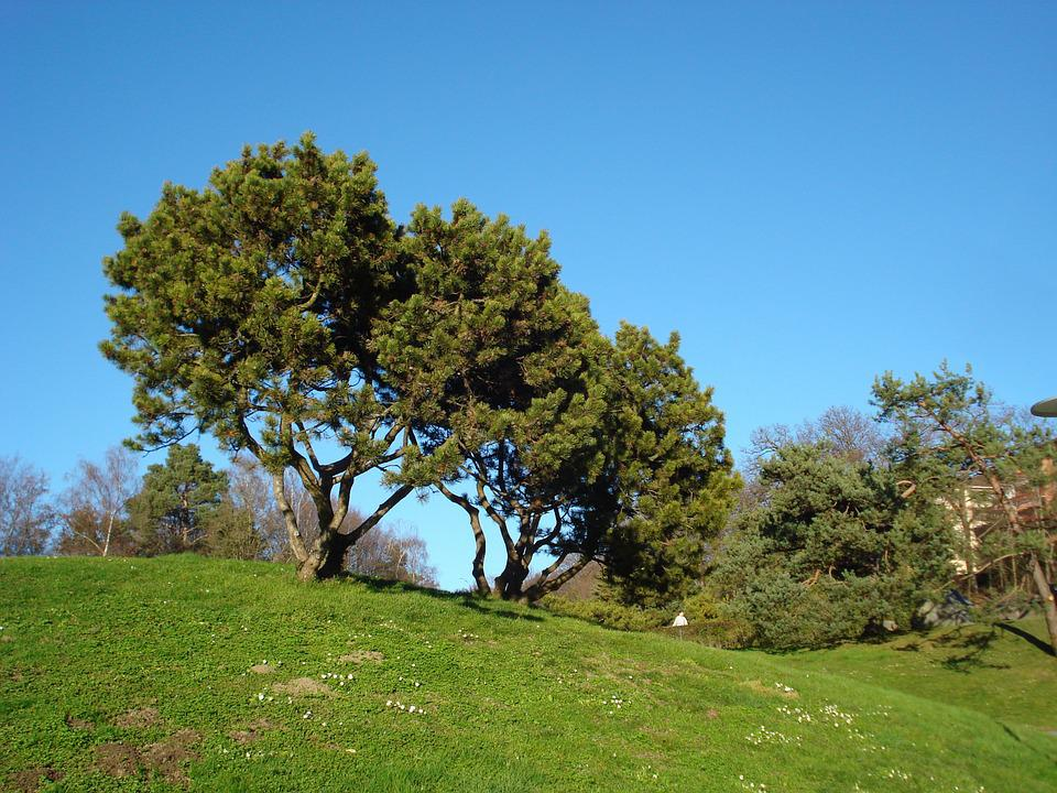 Trees, Nature, Landscape, Green, Turf