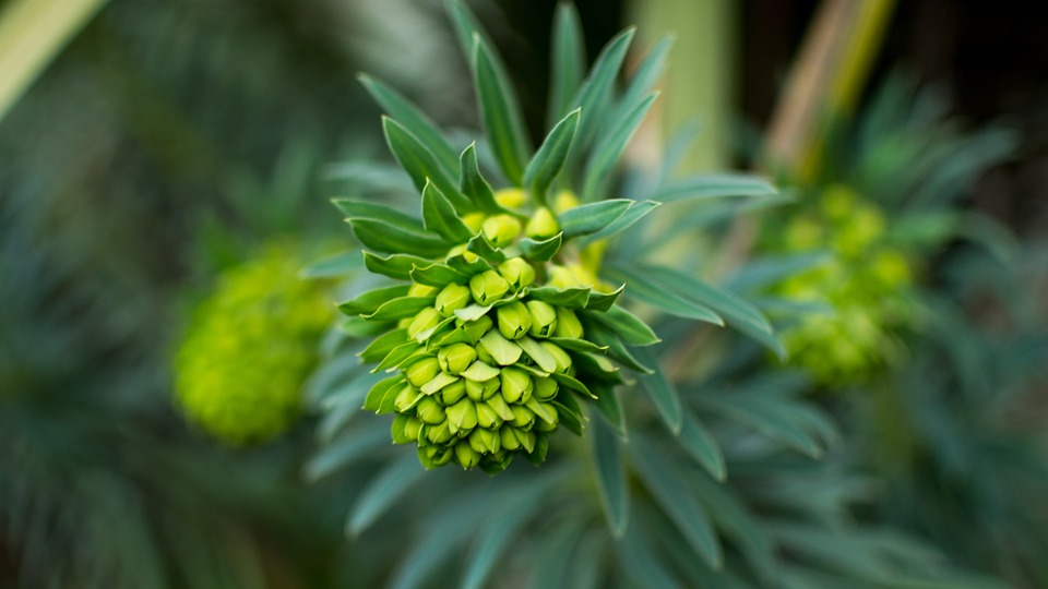 Flower, Cluster, Bloom, Unique, Garden, Green