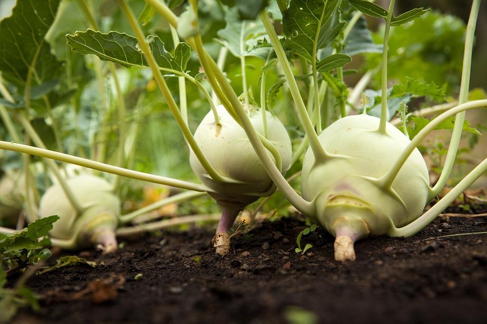 Garden, Vegetable, Vegetable Garden, Gardening, Green
