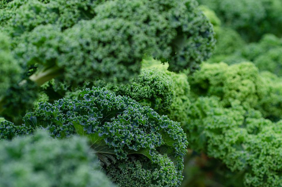 Kale, Fresh, Vegetables, Green, Shades Of Green