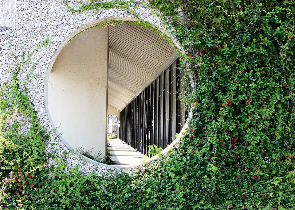 Hole In Wall, Vines, Office Building, Green Vines