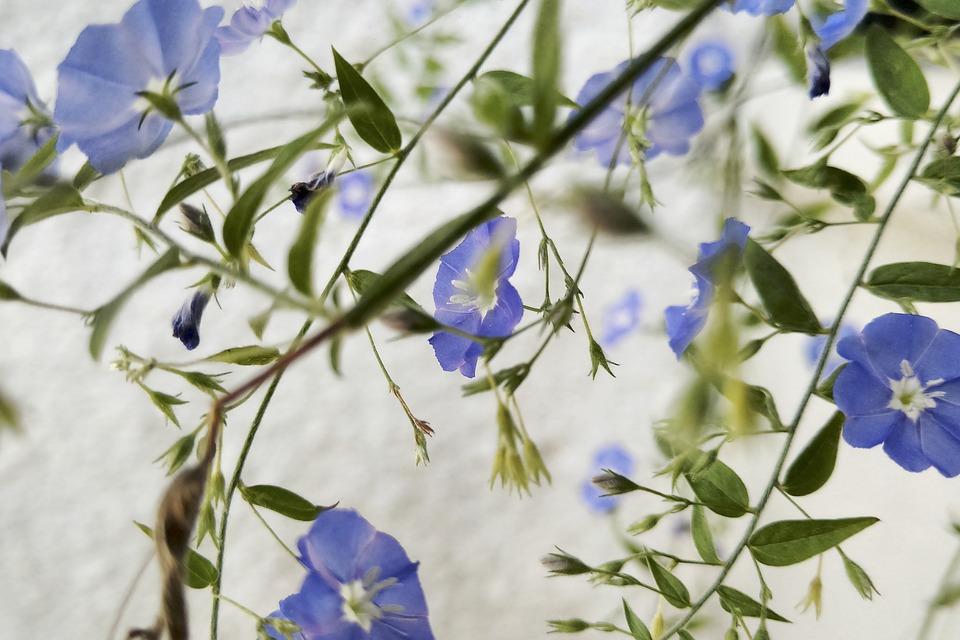 Flower, Flowers, Violet, Green, Flower Button, Spring