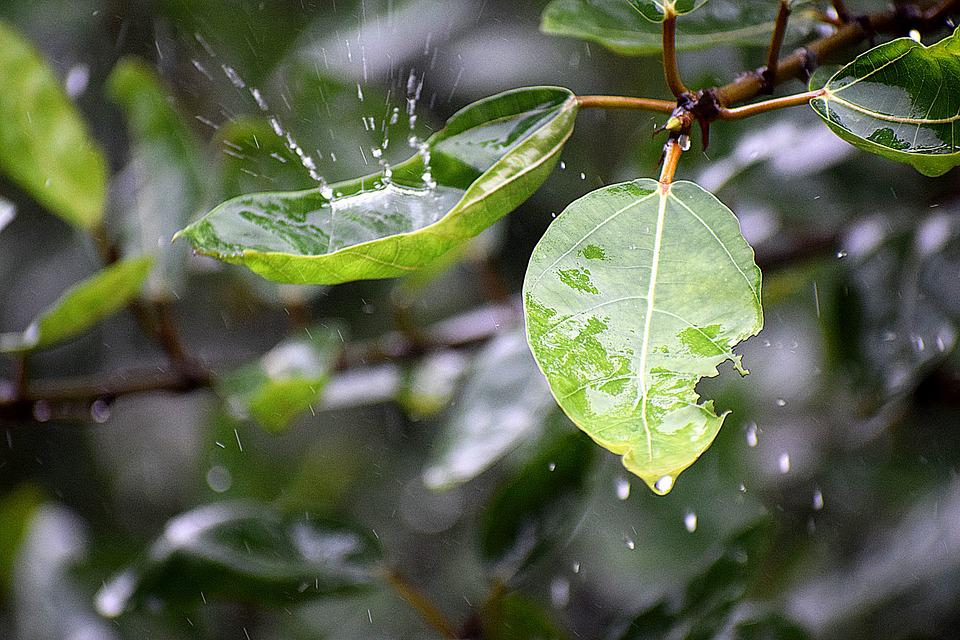 Wet, Rainy, Droplets, Rain, Water, Leaf, Nature, Green