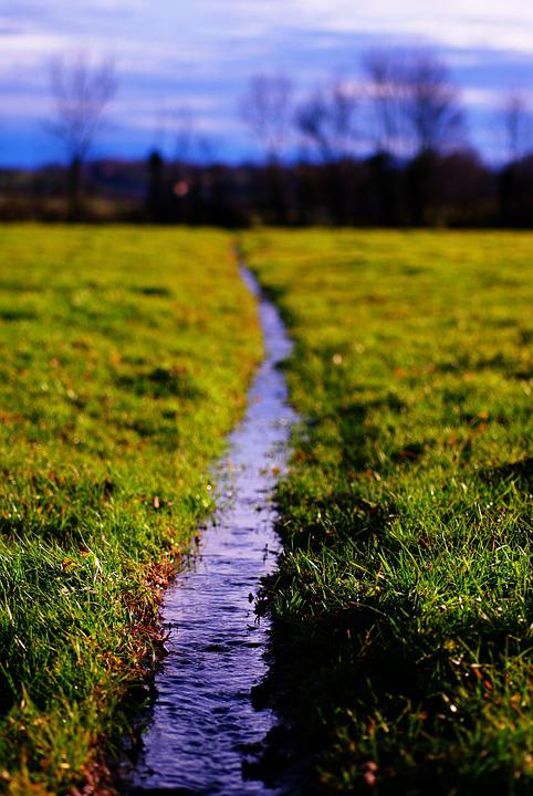 Water, Meadows, Pre, Nature, Grass, Green, Spring, Wet
