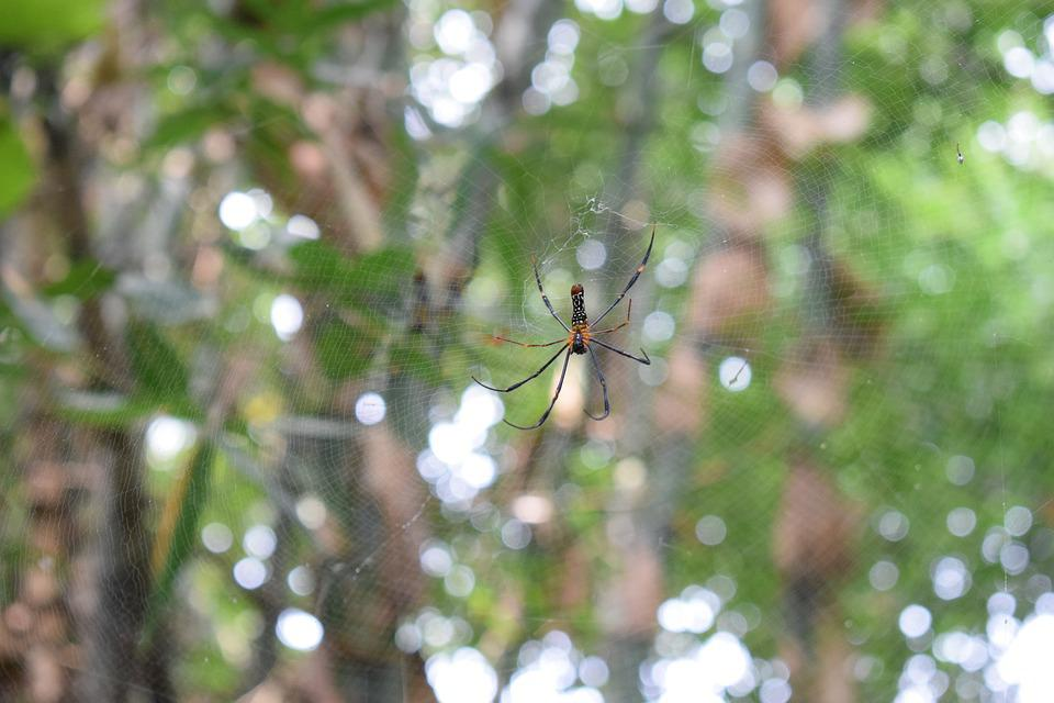 Spider, Wave, Insect, Nature, Outdoor, Green Wave