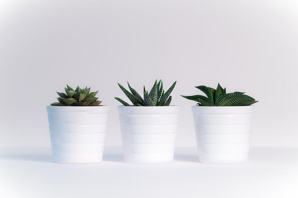 Plants, Sheet, White Background, Nature, Green, Plant