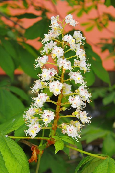 Flower, White, Green, Plant