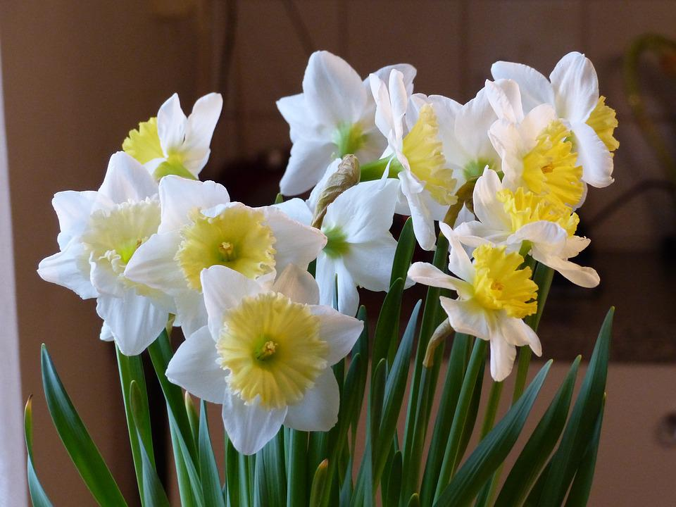 Free photo green white flowers bulbs yellow colors spring max pixel spring flowers white yellow colors green bulbs mightylinksfo