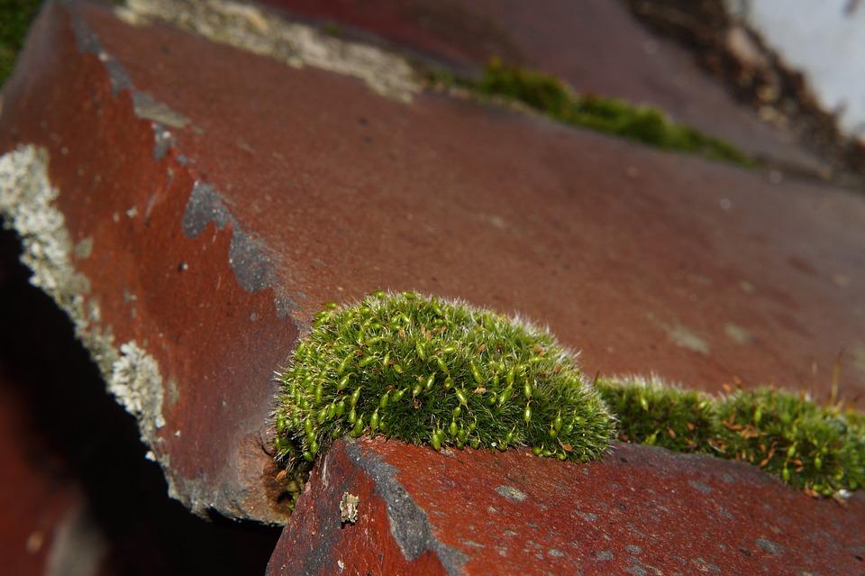 Wall Stone, Window Sill, Moss, Green, Macro