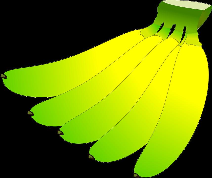 Banana, Fruit, Fresh, Organic, Green, Yellow, Unripe
