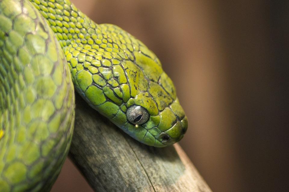 Snake, Green, Reptile, Dangerous, Zoo, Terrarium