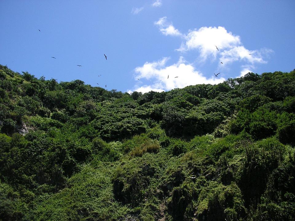 Birds, Tobago, Mountain, Hill, Sky, Landscape, Greenery
