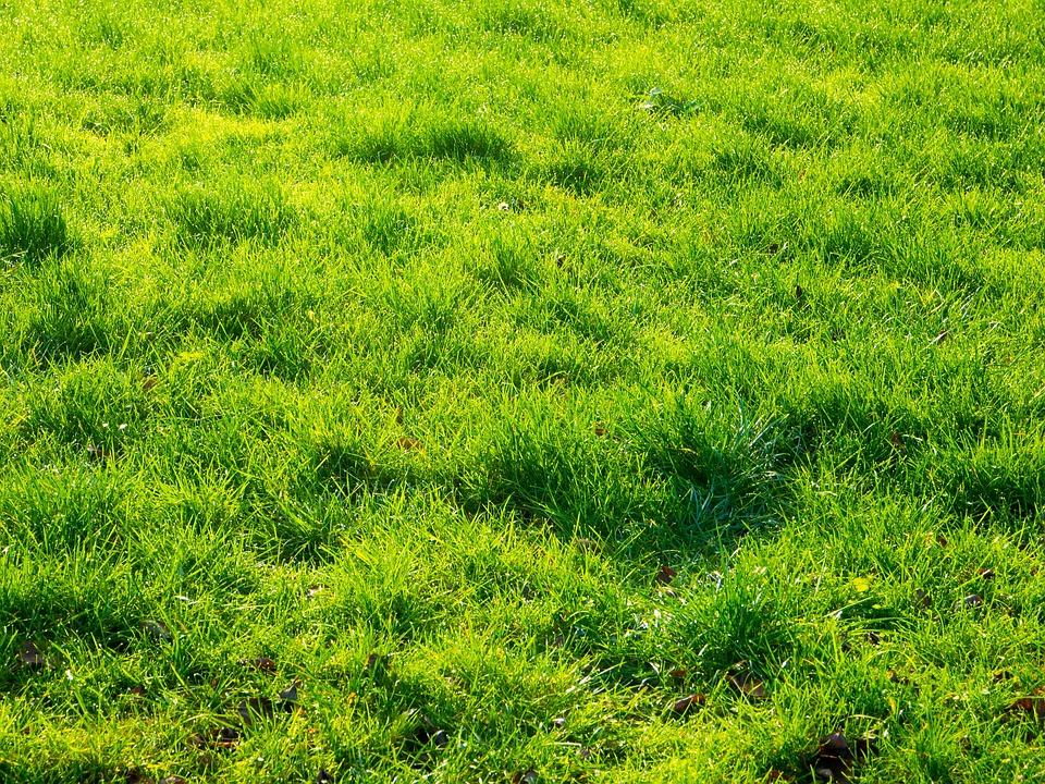 Botany, Field, Grass, Greenery, Halm, Background, Herb