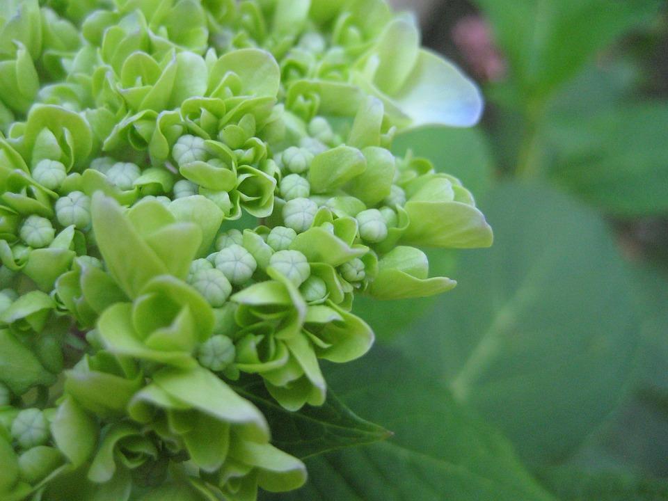 Spring, Blossom, Flower, Plant, Greenery