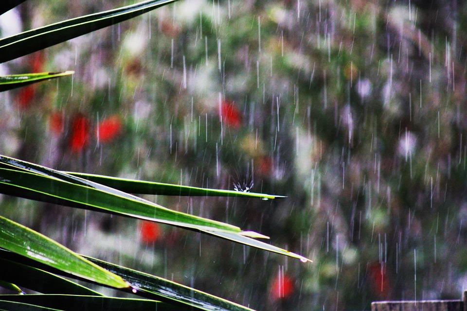 Leaves, Plant, Rain, Foliage, Greenery, Wet, Raindrops