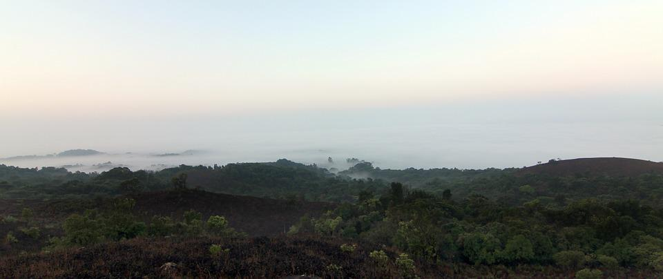 Coorg, Fog, Forests, Greenery, Hills, Jungles