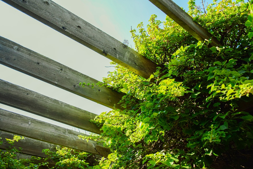 Leaves, Foliage, Fence, Wood, Planks, Trellis, Greenery