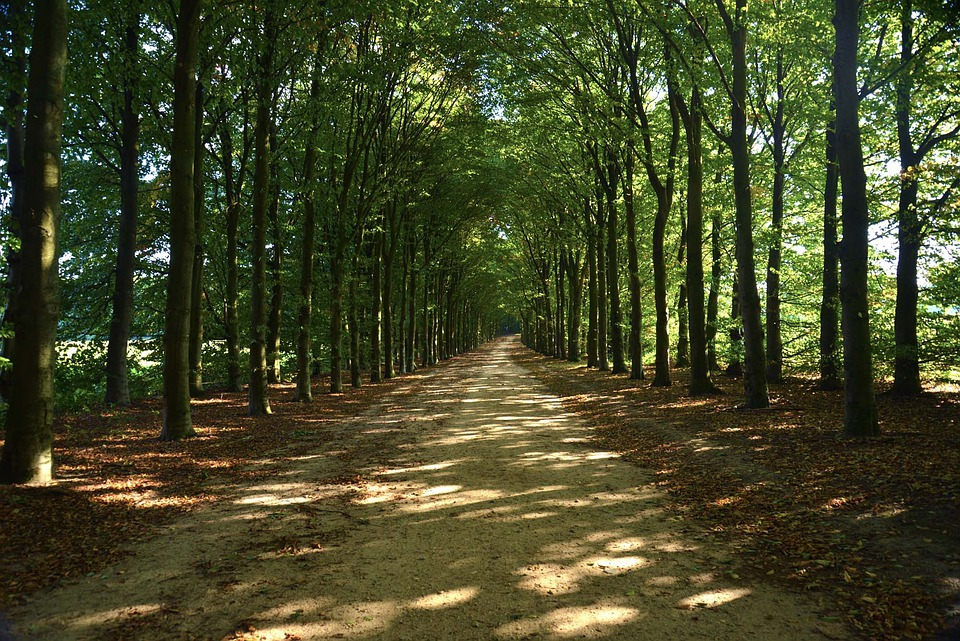 Trees, Greenery, Forests, Parks, Paths, Pathways