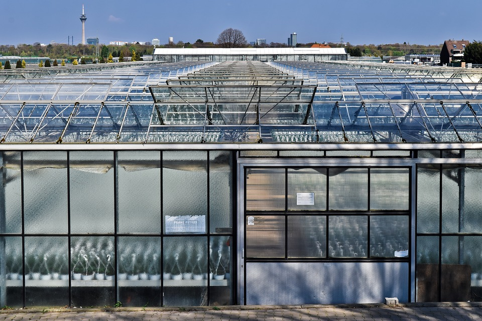 Greenhouse, Glass, Building, Architecture, Plant