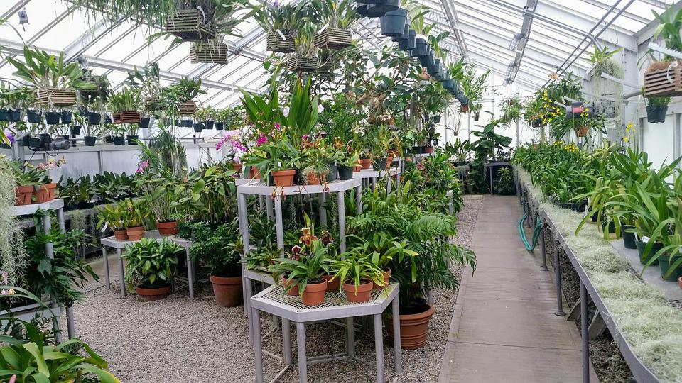 Free Photo Greenhouse Plants Plant Green House Indoor Flowers Max