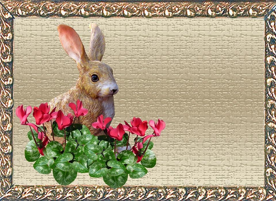 Greeting Card, Rabbit, Cyclamen