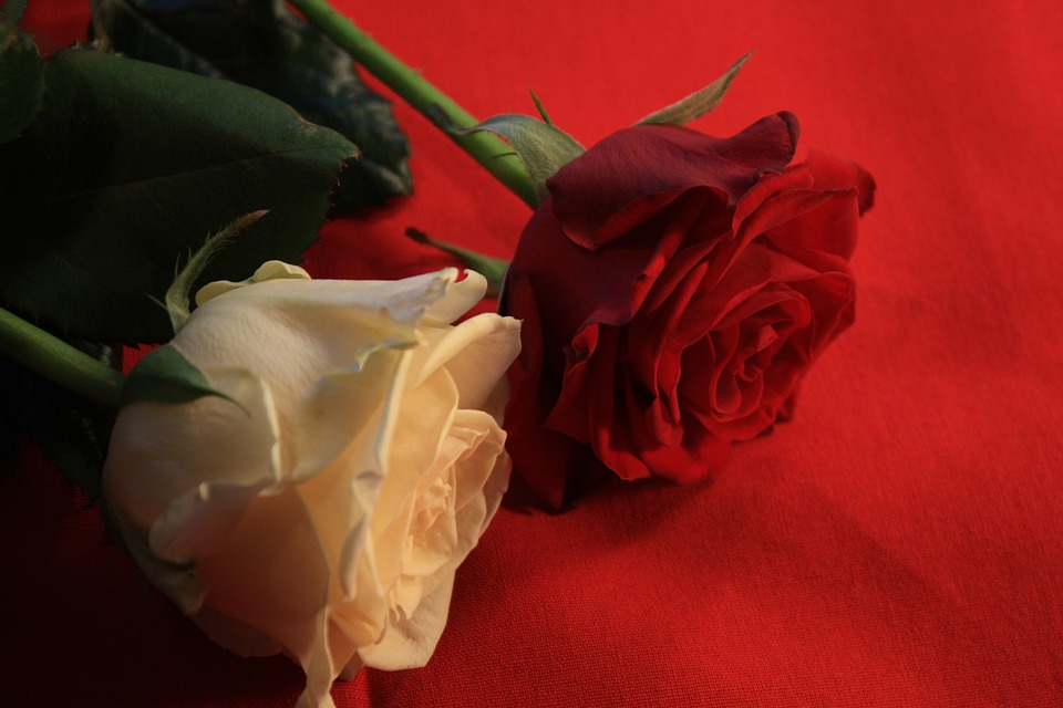 Roses, Love, Luck, Thank You, Festival, Flora, Greeting