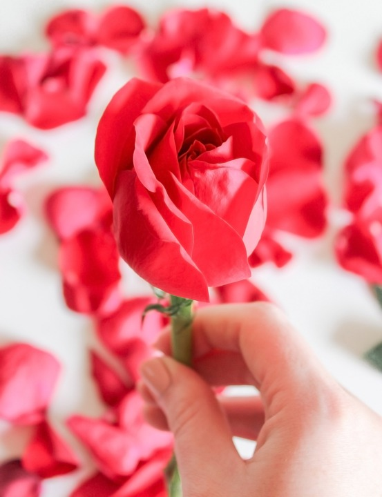 No People, Graphic, Rose, Romantic, Ornament, Greeting