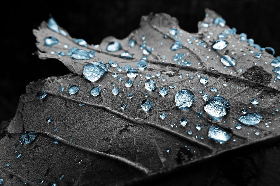 Sheet, Drops, Water, Drop, Macro, Dew, Dry, Blue, Grey