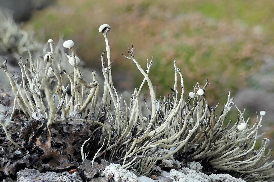 Lichen, Moss, Nature, Woods, Foliage, Macro, Grey