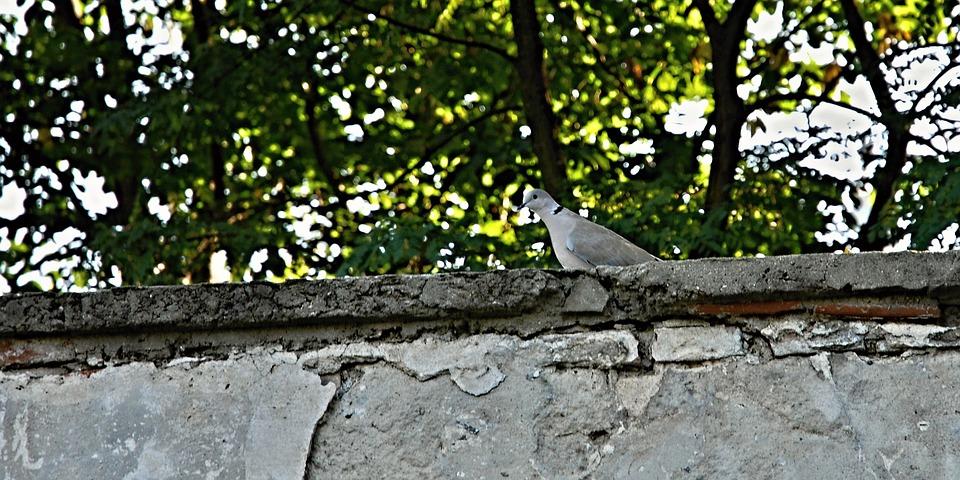 Dove, Wall, Park, Trees, Grey