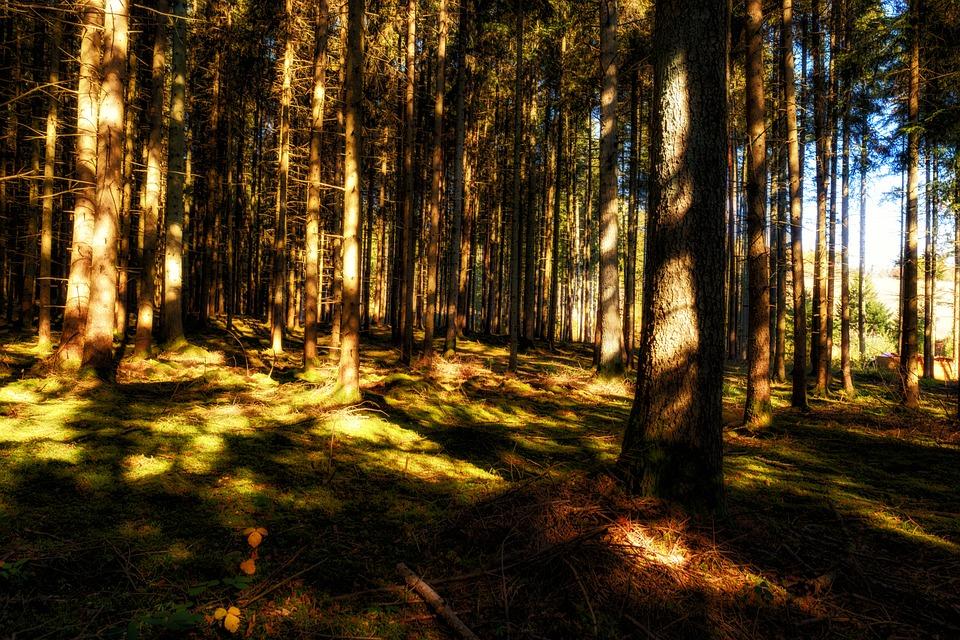Forest, Trees, Sun, Light, Autumn, Moss, Ground