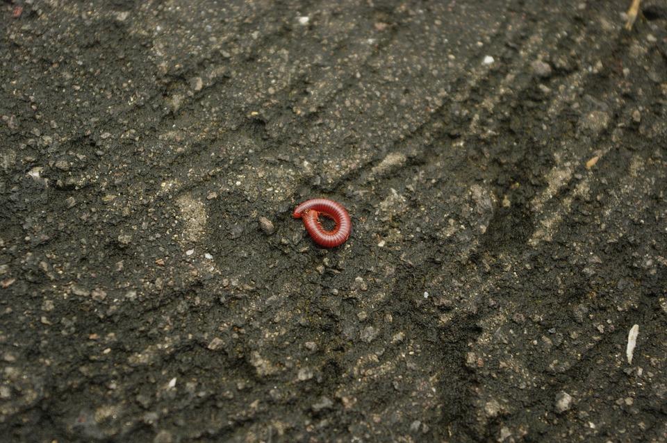 Worm, Critter, Ground, Nature