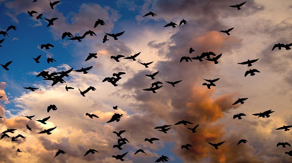Birds, Group, Group Of Birds, Migration, Nature, Cloud